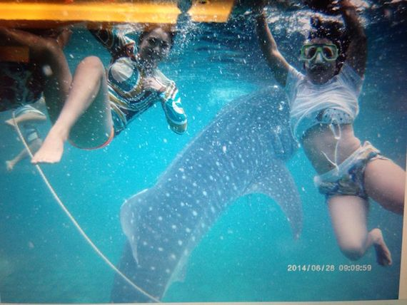 lils-floating-whaleshark.jpeg