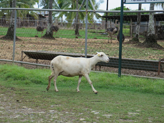 Ostrich and Crocodile Farm (5)