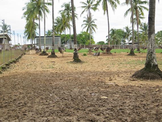 Ostrich and Crocodile Farm (6)