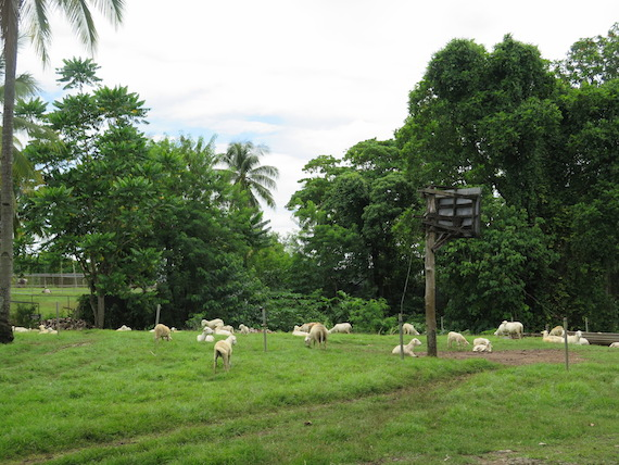 Ostrich and Crocodile Farm (7)