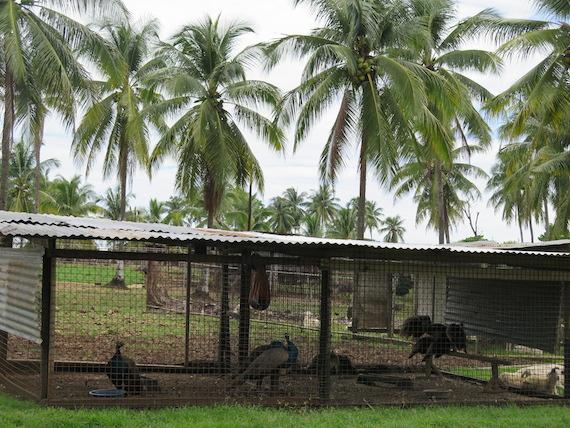 Ostrich and Crocodile Farm (8)