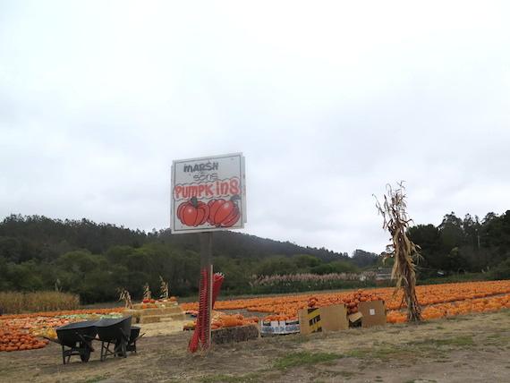 Pumpkin Festival (3)