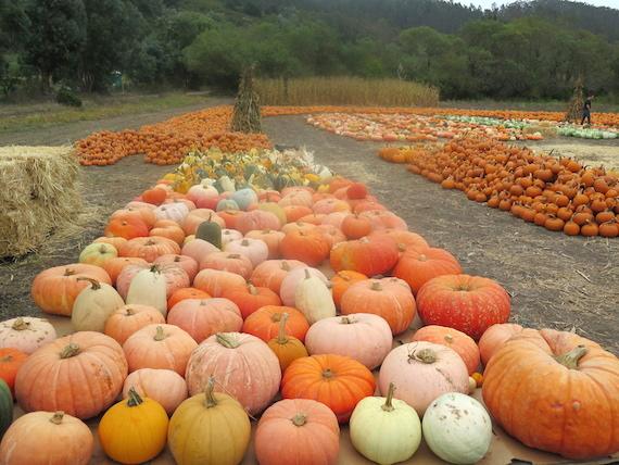 Pumpkin Festival (4)