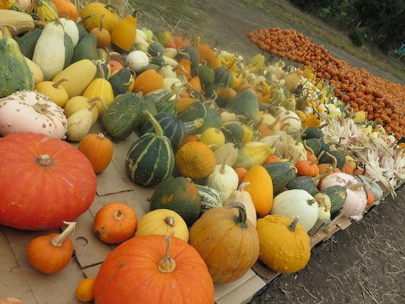 Pumpkin Festival (5)