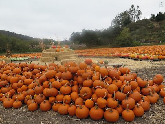 Pumpkin Festival (6)