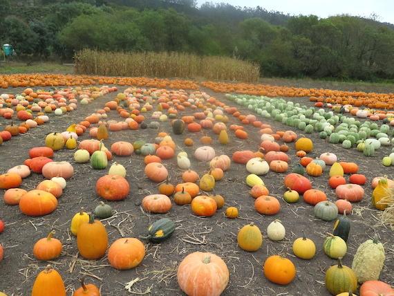 Pumpkin Festival (7)
