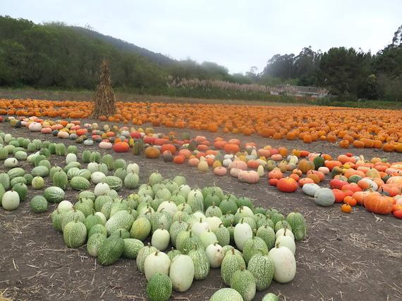 Pumpkin Festival (8)