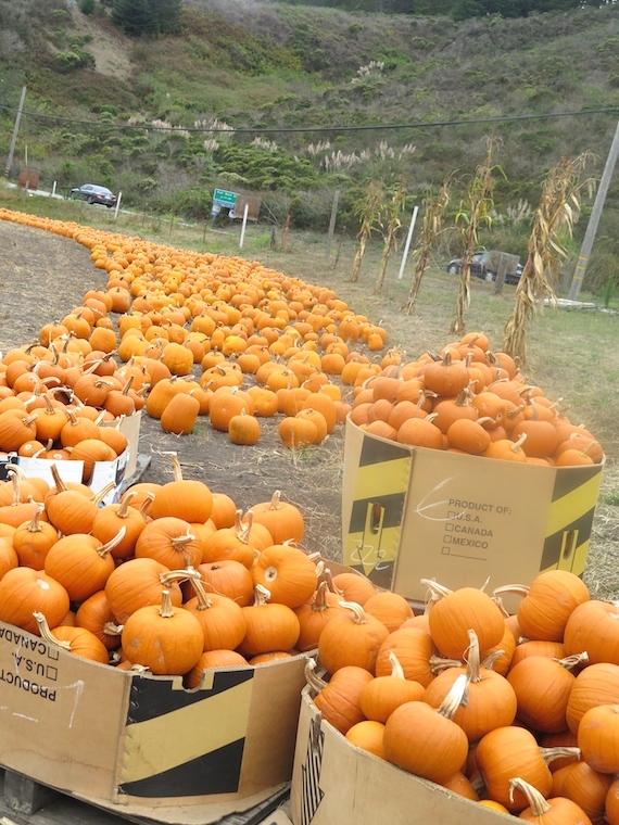 Pumpkin Festival (9)