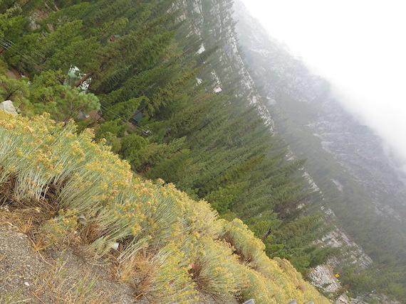 Road Trip to Lake Tahoe (1)