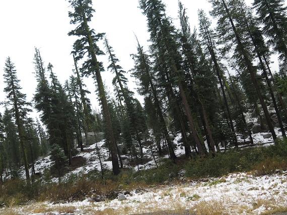 Road Trip to Lake Tahoe (3)