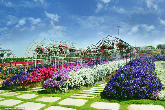 World's Largest flower garden (1)