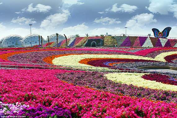 World's Largest flower garden (10)