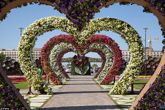 World's Largest flower garden (14)