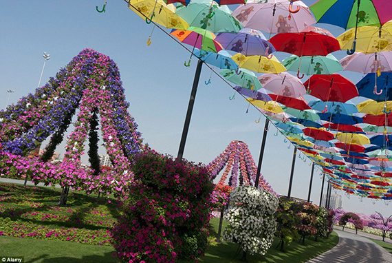 World's Largest flower garden (16)