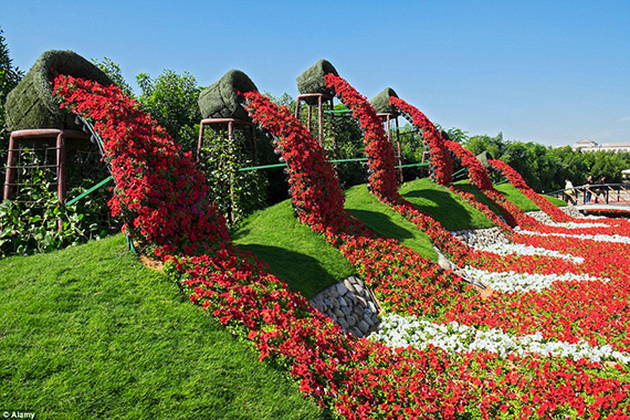 World's Largest flower garden (17)