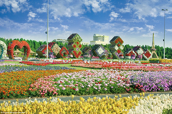 World's Largest flower garden (3)