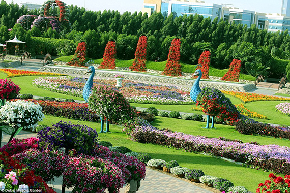 World's Largest flower garden (4)