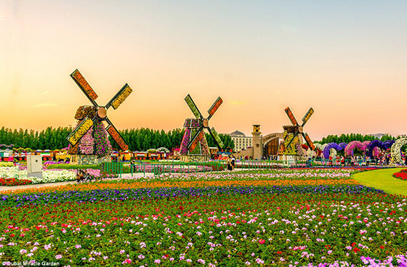 World's Largest flower garden (8)