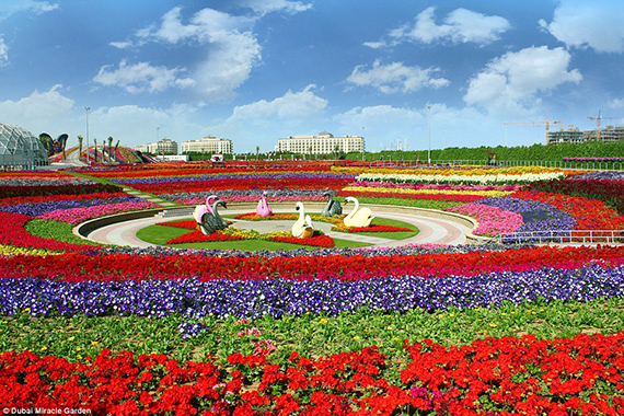 World's Largest flower garden (9)
