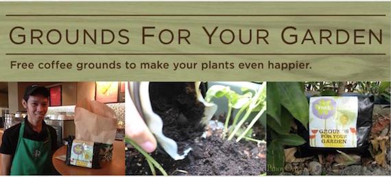 Grounds for your garden starbucks philippines
