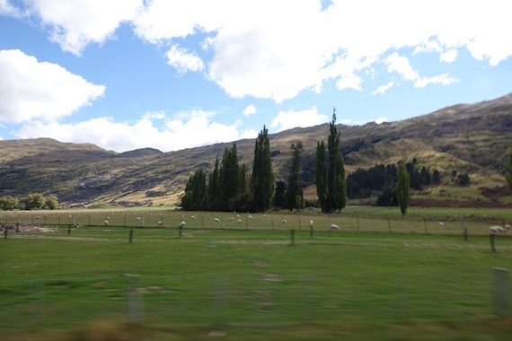 Arrowtown (14)