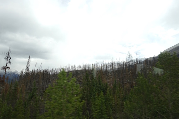Canadian Rockies (5)