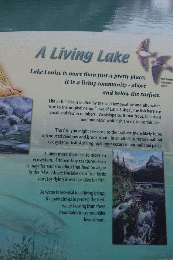 Lake Louise Banff (6)