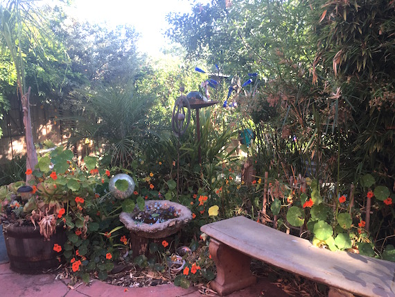 The Dotson's Garden (6)