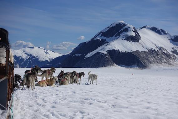 Dog Sledding in Junaeu Alaska (18)