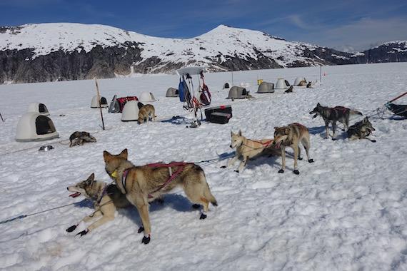 Dog Sledding in Junaeu Alaska (20)