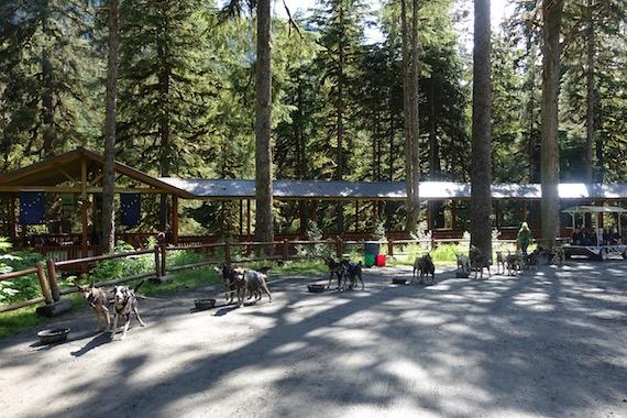 Musher's Camp Junaeu Alaska (1)
