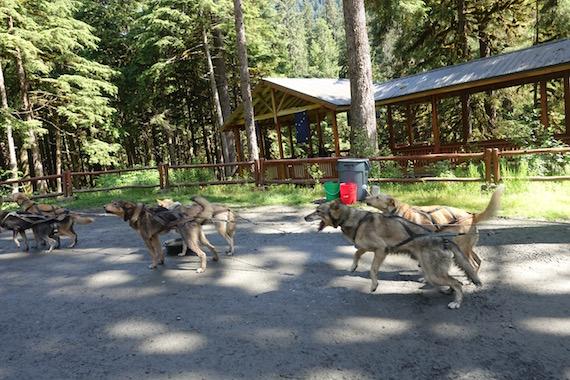 Musher's Camp Junaeu Alaska (2)