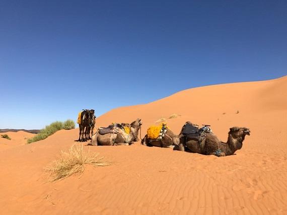 Sahara Desert Caravan (10)