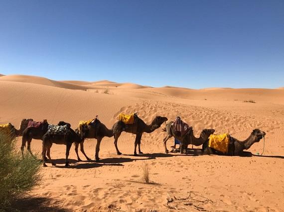 Sahara Desert Caravan (11)