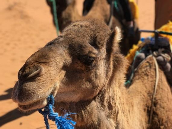 Sahara Desert Caravan (15)