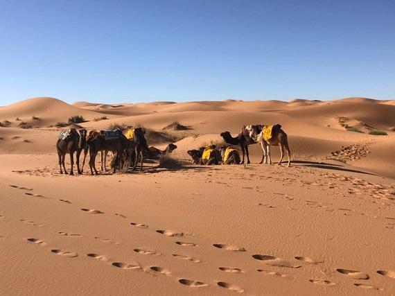 Sahara Desert Caravan (3)