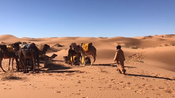 Sahara Desert Caravan (5)