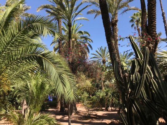 Jardin Majorelle11
