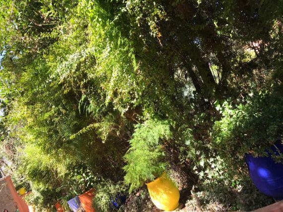 Jardin Majorelle17