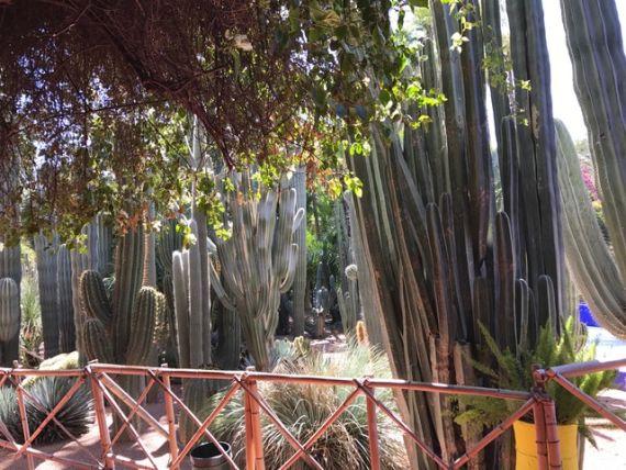 Jardin Majorelle36