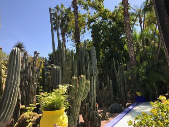 Jardin Majorelle40
