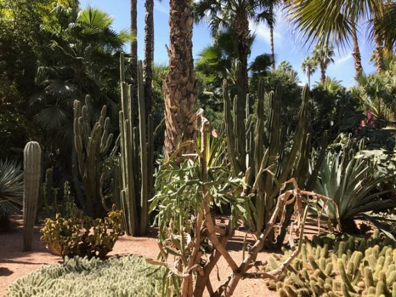 Jardin Majorelle48