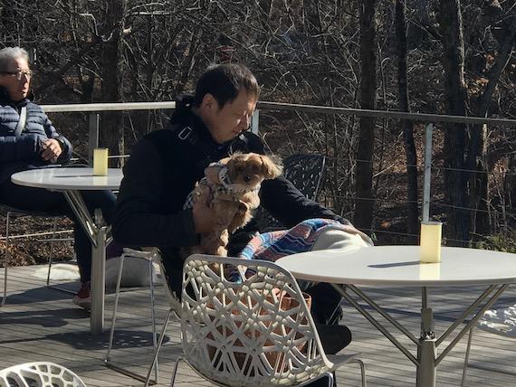 dogs harunire karuizawa 11