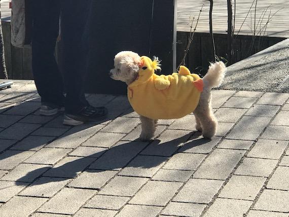 dogs harunire karuizawa 3