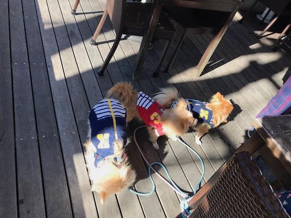 dogs harunire karuizawa 5