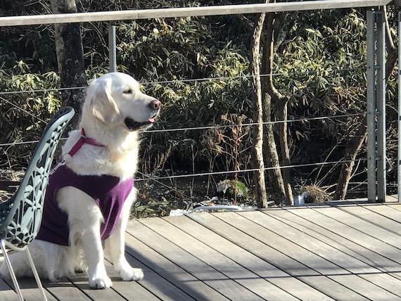 dogs harunire karuizawa 6