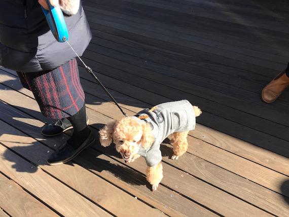 dogs harunire karuizawa 7