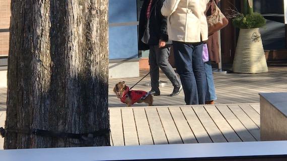 dogs harunire karuizawa 8