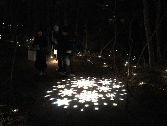 hoshino light at night